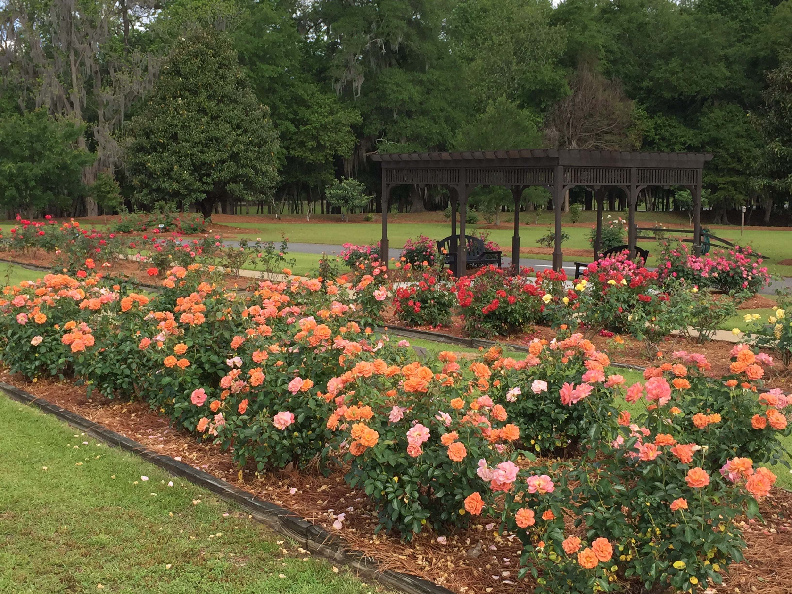 Thomasville Rose Garden | Official Georgia Tourism & Travel Website ...