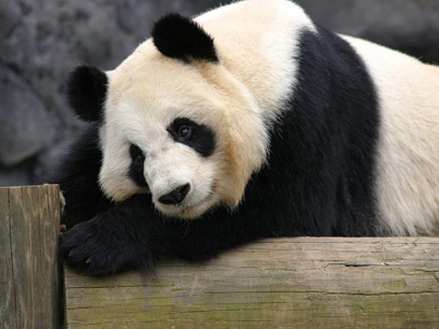Zoo Atlanta Official Georgia Tourism Travel Website Explore Georgia Org