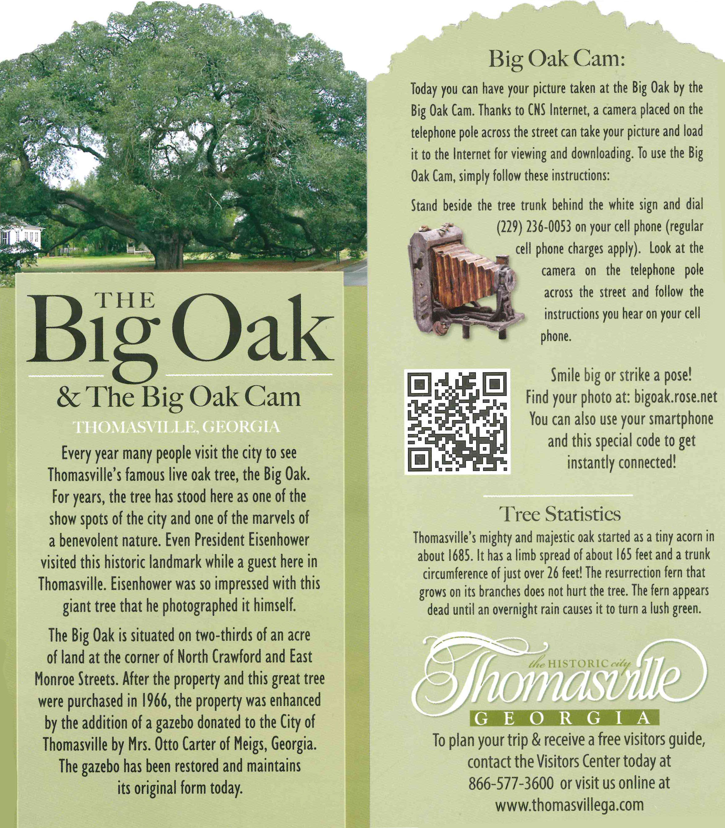 The Big Oak and Big Oak Cam | Official Georgia Tourism & Travel