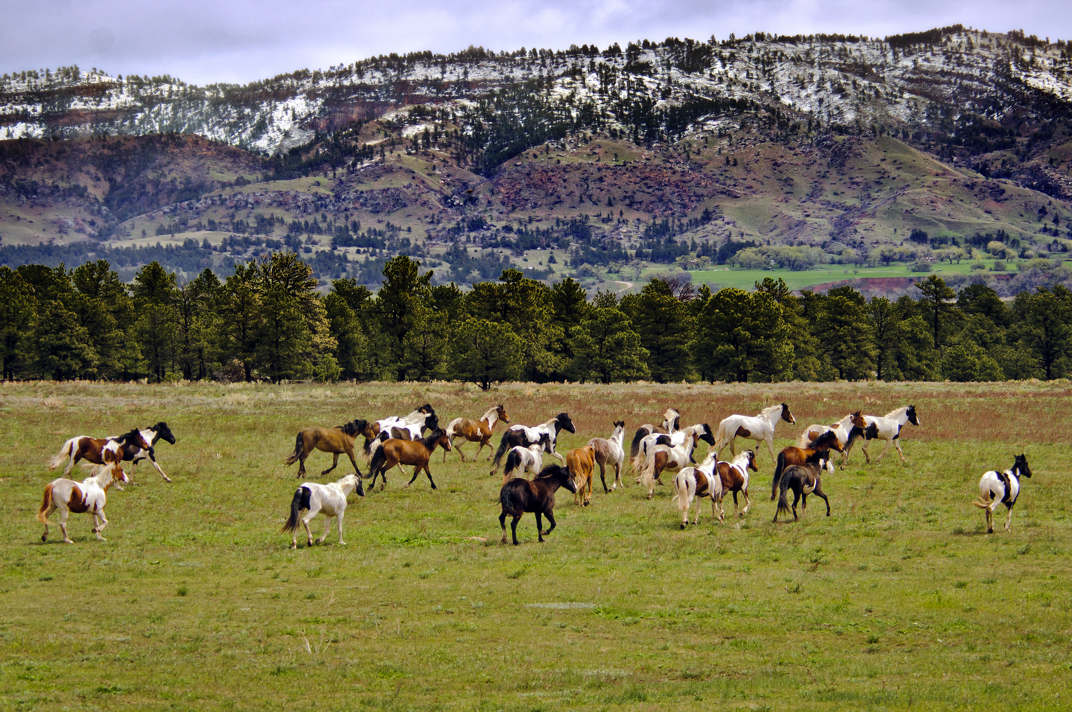 Black Hills Wild Horse Sanctuary Travel South Dakota