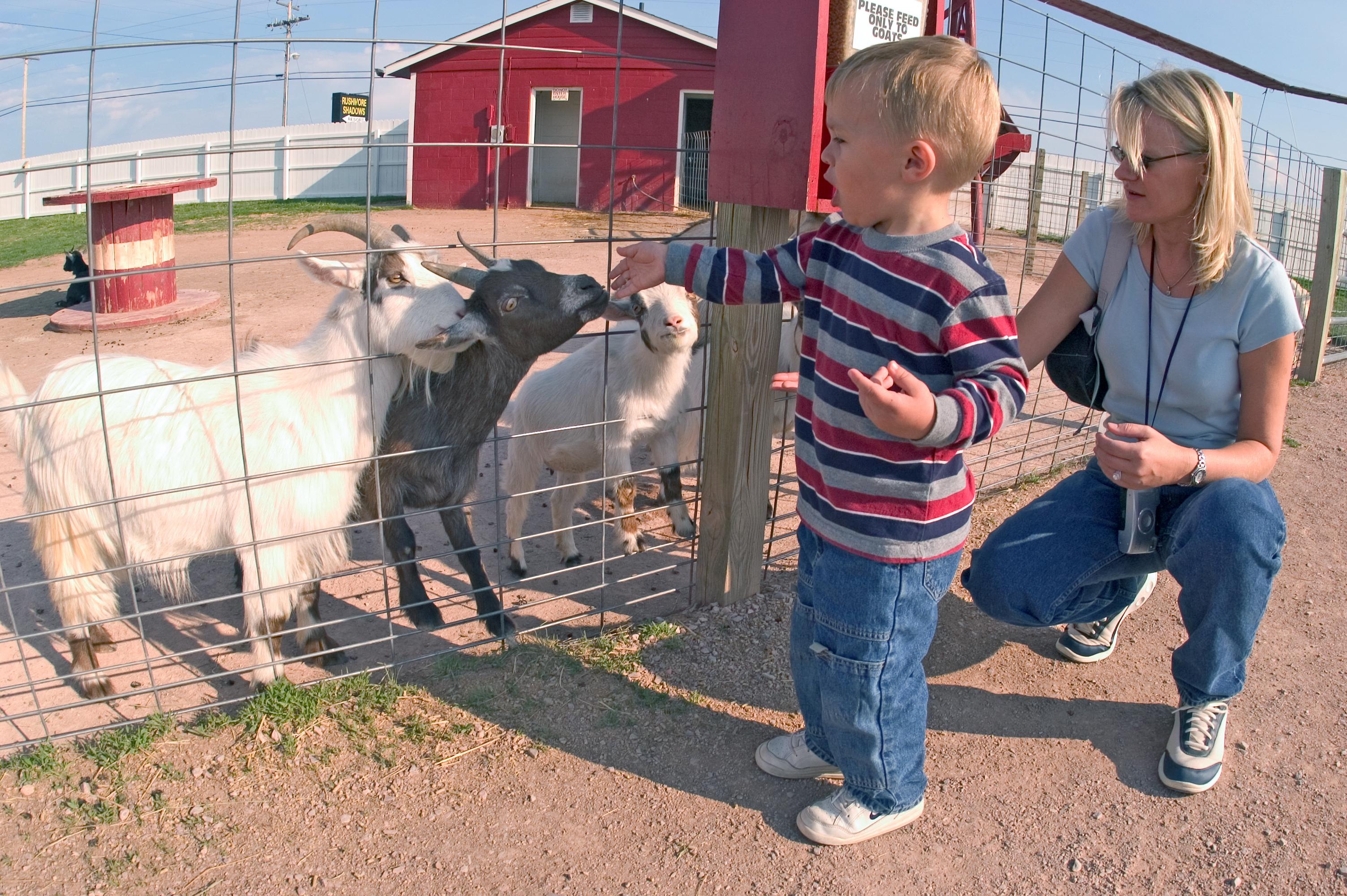 Old Macdonald S Farm Travel South Dakota