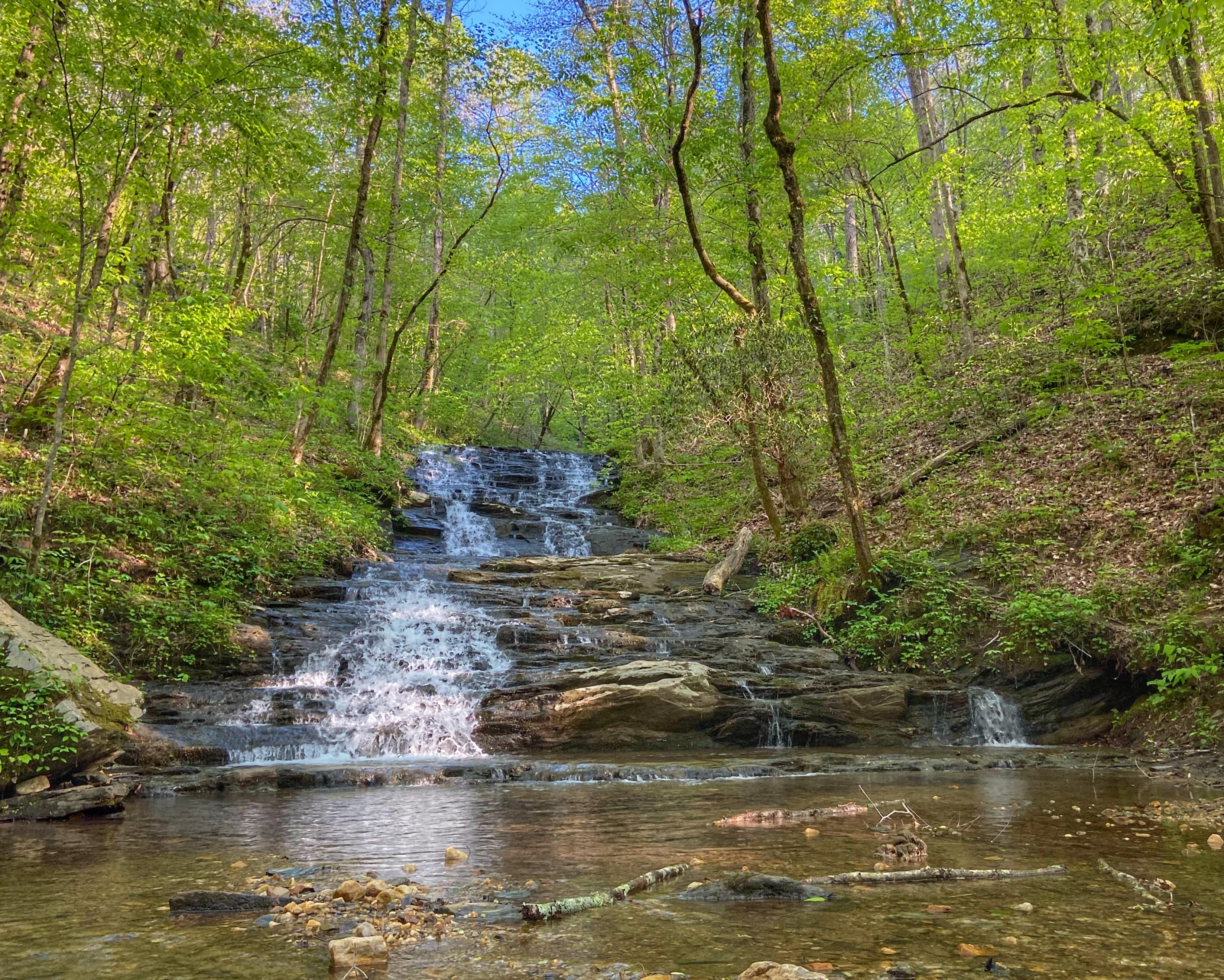 Dawson Forest Wildlife Management Area   Official Georgia Tourism & Travel Website   Explore Georgia.org