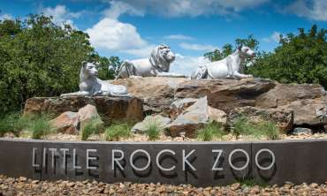 Zoo Little Rock 072019 _CHC_1277.jpg
