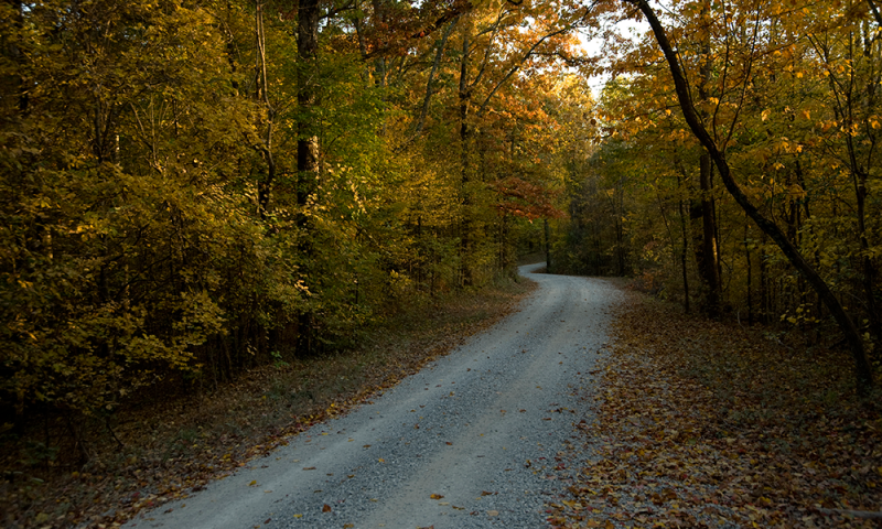 St_Francis_National_Forrest_Fall_ACH_4387.png