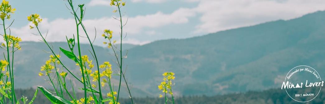 Flores Mineiras Nativas e Raras