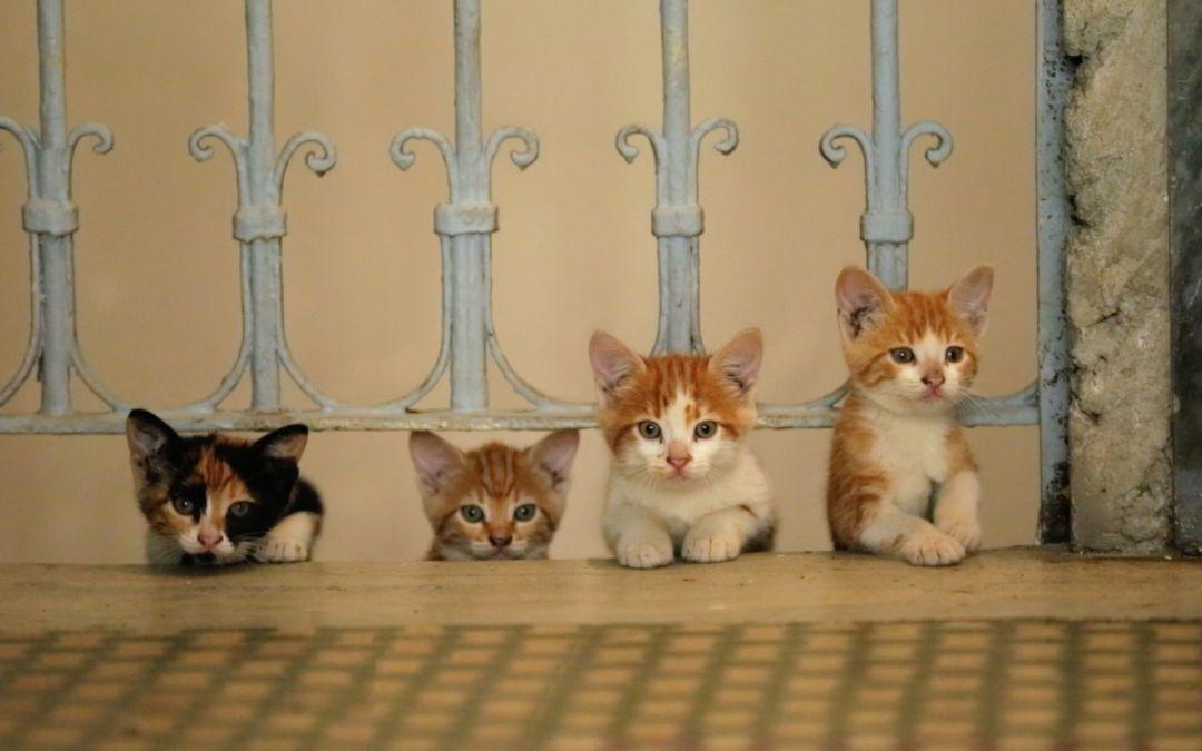 Kedi, de Ceyda Torun