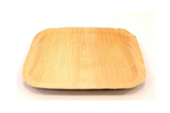 צלחת מרובעת חד פעמית 20/20 ס``מ - מעצי דקל
