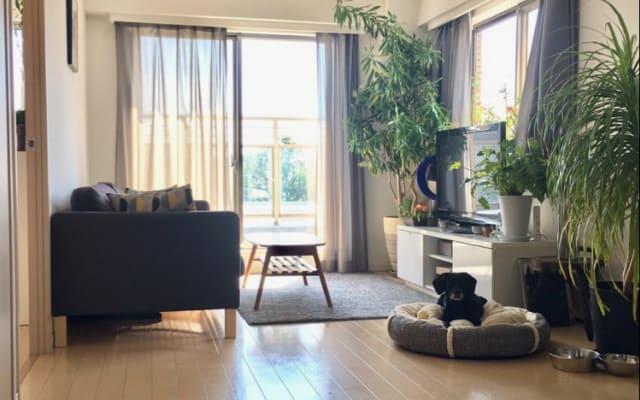 Yoyogi / Shinjuku - para amantes de cães