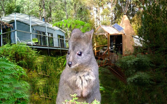 Eco-Studio Cabin in a private nature reserve 50 min south from Hobart