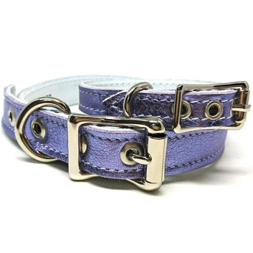 Buddy Belts Luxury ID Collars (Pixie 2.0)