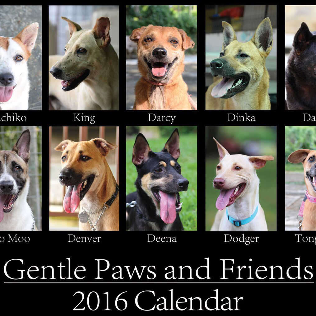 Gentle Paws 2016 Calendar