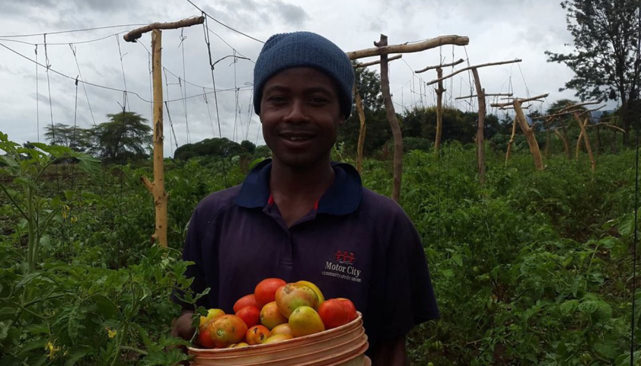 Rajabu's first tomato harvest