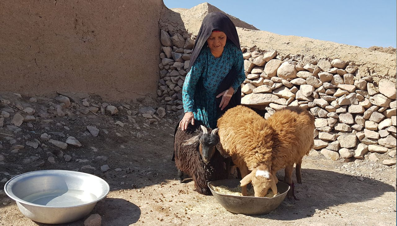 Through sheep and chicken, grandma Safia and her family are thriving