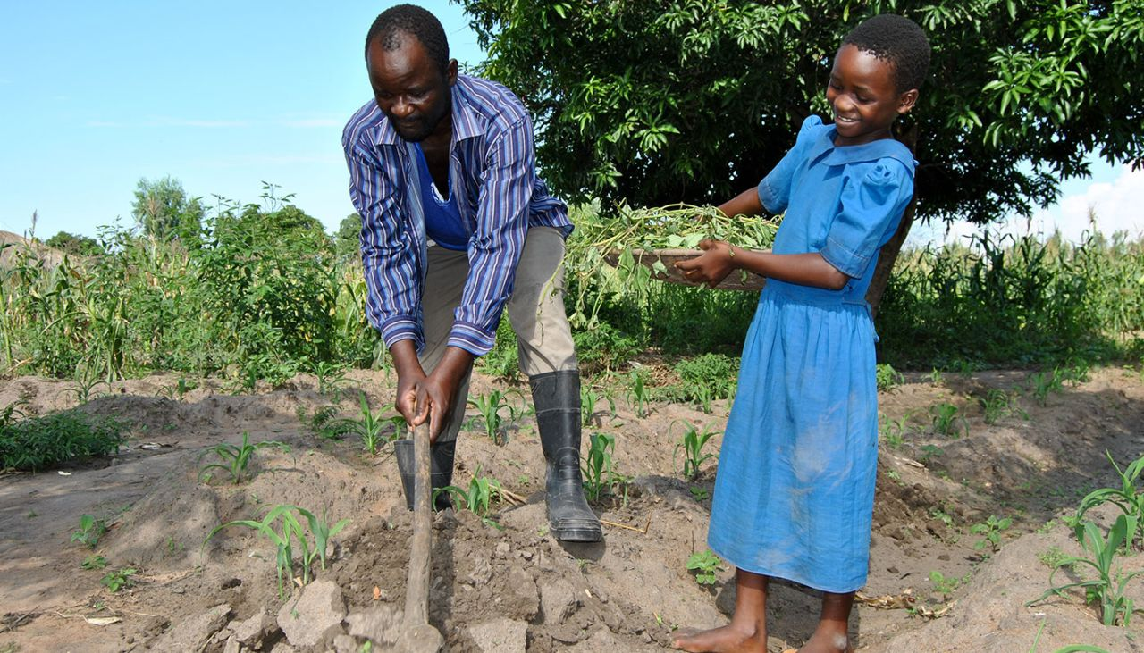 Improved farming transforms lives in Malawi
