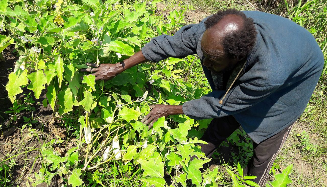 Growing vegetables, a fruitful way of life