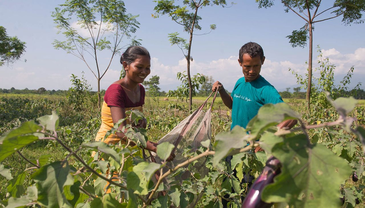 Families in Dumka working together to grow food