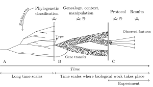 Measurement in biology is methodized by theory