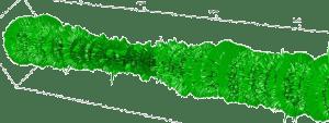 Changements de symétrie, criticité et aléatoire: Mathématiques et objectivation du vivant