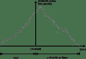Répétition et réversibilité dans l'évolution : La génétique des populations théorique