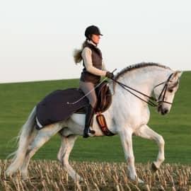 Couvre reins AMIGO COMPETITION SHEET HORSEWARE