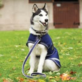 Laisse pour Chien Amigo Dog Lead Horseware