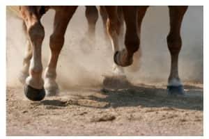 Tendon & Articulation Cheval