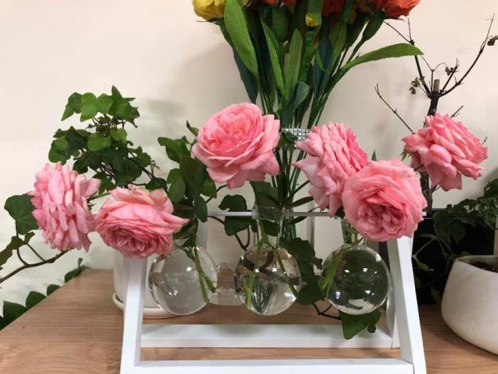 Hoa hồng Lady Heirloom  - 0