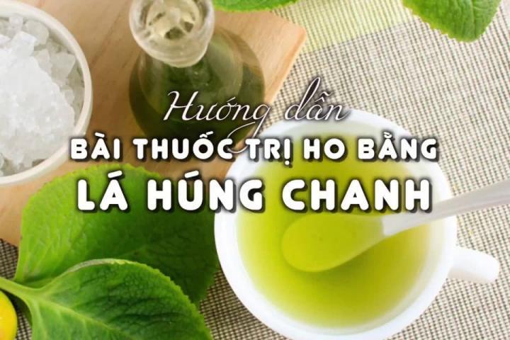 Cây húng chanh (tần dày lá) - 0