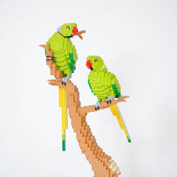 Ring-Necked Parakeets - by @felixjaensch