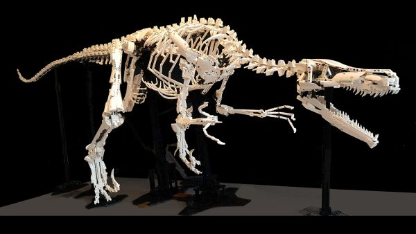 Velociraptor Skeleton [1:1] - by Damian Thomas