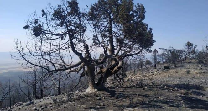 Nallıhan'daki yangında soğutma çalışmaları sürüyor
