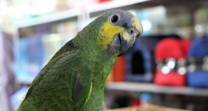 Elazığ'da 20 kelime söyleyen papağan ilgi görüyor