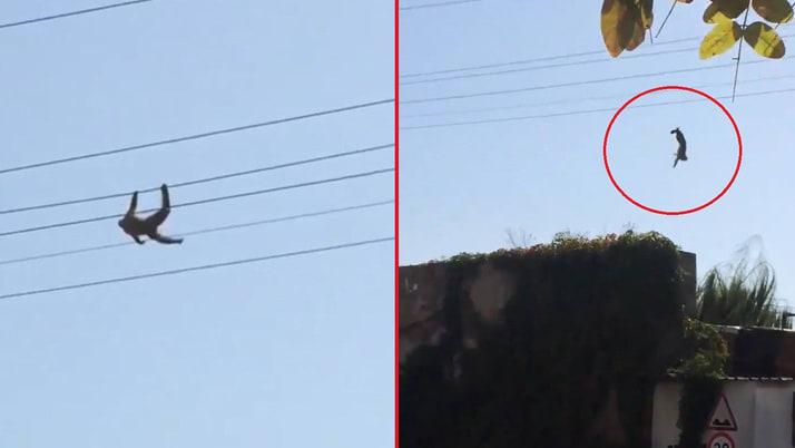 Kocaeli Darıca'da firar eden maymun elektrik akımına kapılarak yaralandı