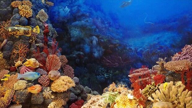 Büyük Bariyer Resifi 1995'ten bu yana mercanlarının yarısını kaybetti