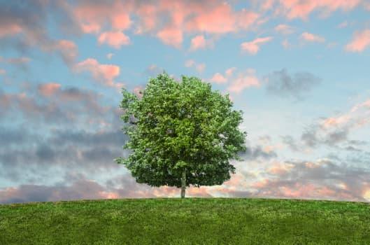 Webpack Tree Shaking