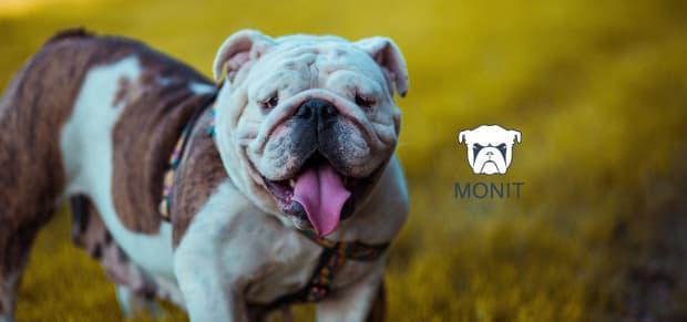 Monit - Easy Monitoring