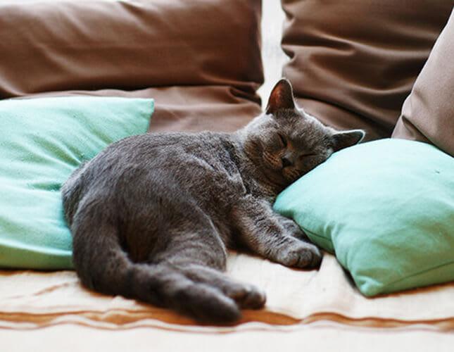 So entfernst du Katzenhaare von Teppich, Bett und Sofa