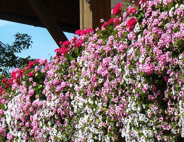 Balkonbepflanzung bei Sonne, Halbschatten und Schatten