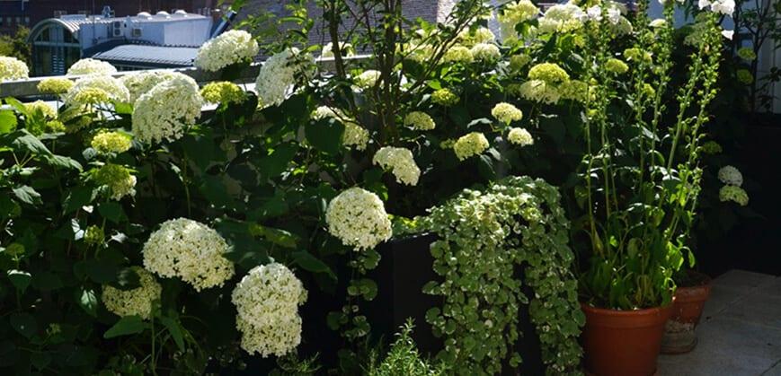 Pflegeleichte Balkonpflanzen in weiß