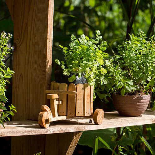 Gemüse und Kräuter auf dem Balkon anbauen