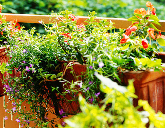 Balkonkästen bepflanzen – Schritt für Schritt