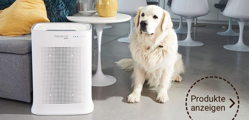 weißer Luftreiniger im Wohn- & Essbereich
