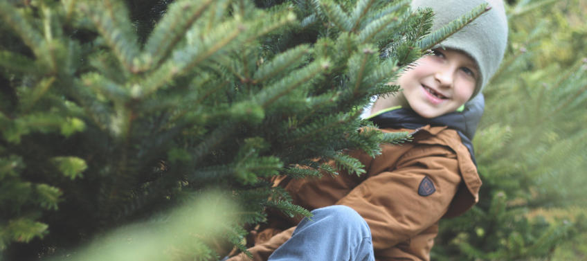Cut Your Own Christmas Tree.5 Places To Cut Your Own Christmas Tree Near Chicago Mommy