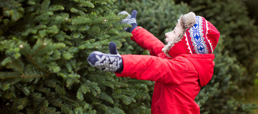 Cut Your Own Christmas Tree Near Me.Cut Your Own Christmas Tree Farms Near Nyc Mommy Nearest