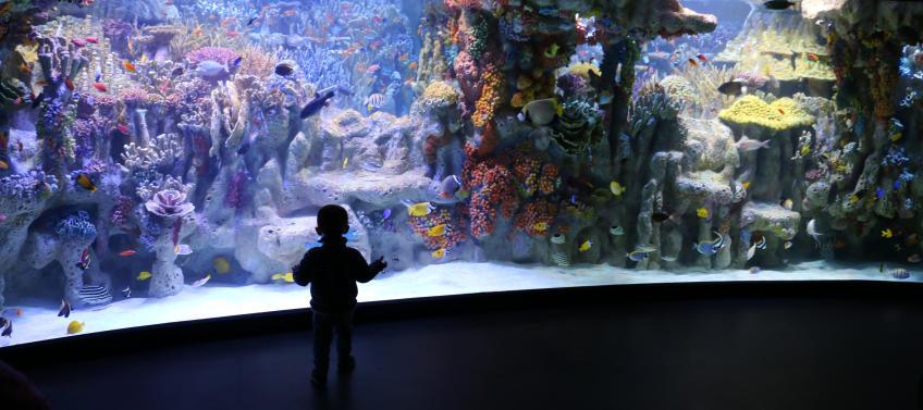 5 Reasons to Visit the New England Aquarium This Summer ...