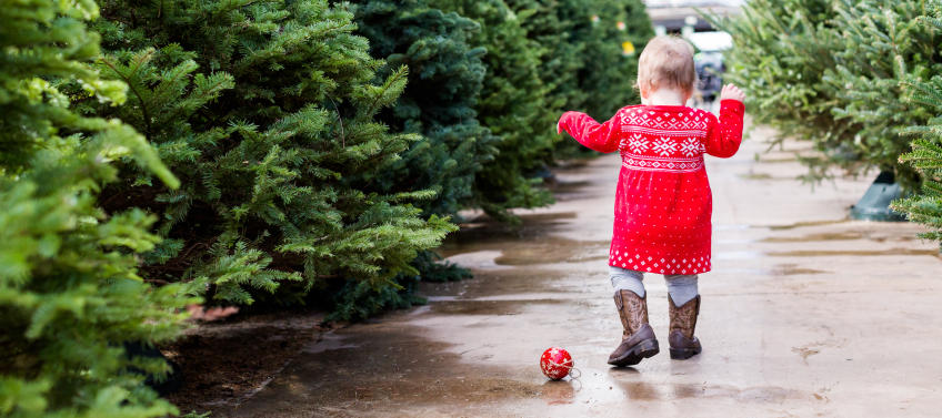 lead image for best places to buy a christmas tree in the bay area - Best Place To Buy A Christmas Tree
