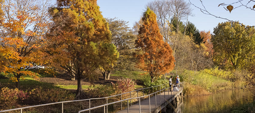 Lead Image For 6 Best Spots For Leaf Peeping Around Chicago