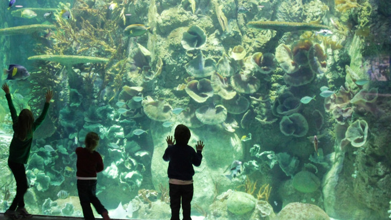 Guide to Visitng Moody Gardens in Galveston Texas With Kids Mommy