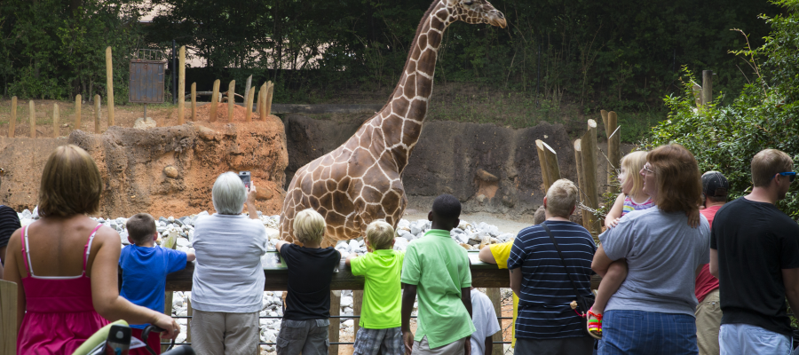 Family Friendly Guide To Visiting The Zoo Atlanta Mommy Nearest