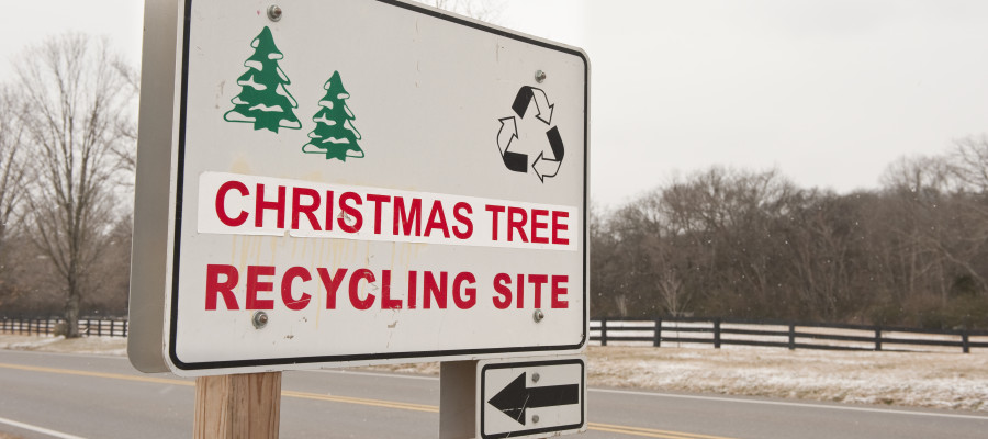 lead image for where to recycle your christmas tree in chicago - Chicago Christmas Tree Recycling